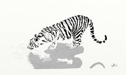 Tiger by carreddy