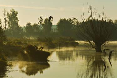 Foggy morning VI by Hellweg