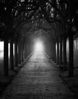 ... the path by Hellweg