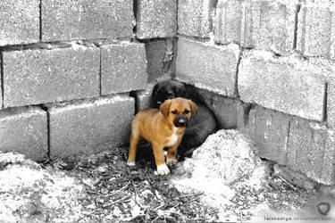 Dog Protect Dog by farshadfgd