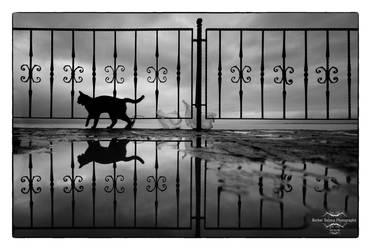 cat by berkerr