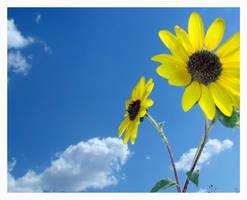 Sunflower by bonnjo2