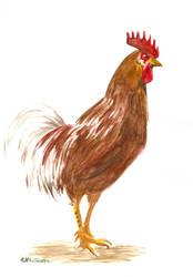 Rooster by LunaticSqirrel