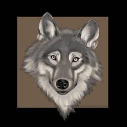 Wolf by LunaticSqirrel