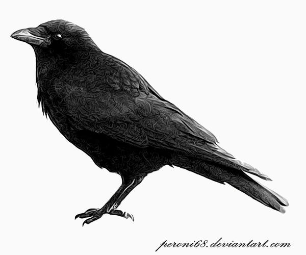 a crow by peroni68