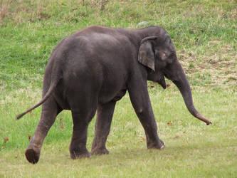 Elephant Stock 2 by HOTNStock