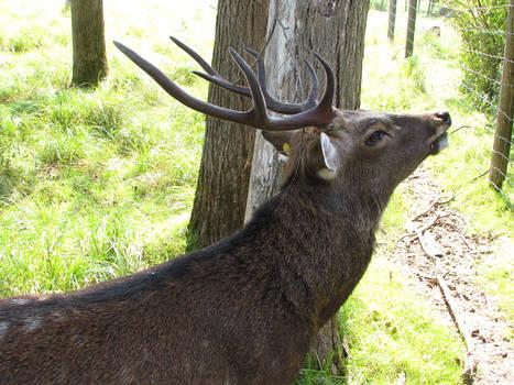 Deer Stock 3 by HOTNStock
