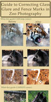 Guide to Removing Glare/Fencing in Zoo Photography by HOTNStock