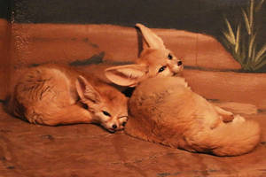 Fennec Fox Stock 1 by HOTNStock