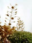 dried flowers III by clandestine-stock