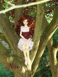 On a tree by Sanveanne