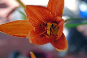 Tiger Lily VII by charliemarlowe