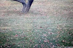 Gray Winter Day I by charliemarlowe