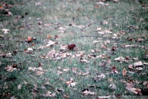 Gray Winter Day II by charliemarlowe