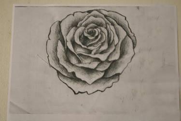 rose study by mrnaps