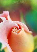 Wild Rose by kasieisdell