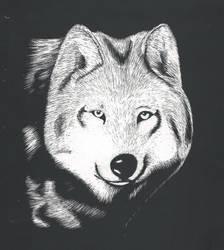 Random Thursday- Wolf Scratchboard by Biofauna25