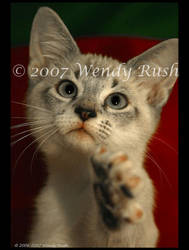 Reach Out and Touch a Kitten by IrishRaine