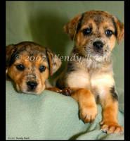 Distinctive Puppies by IrishRaine