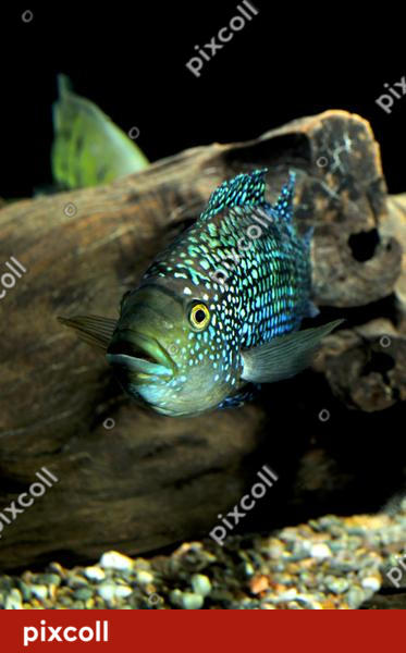 Tropical Fish by Junior-rk