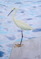 Little egret (Egretta garzetta) by l-Zoopy-l