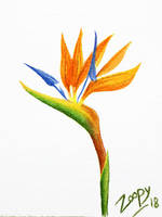 [2 euro commission] Strelitzia - Bird of paradise by l-Zoopy-l