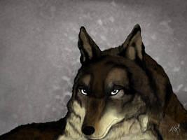 Lobo by anythingLDA