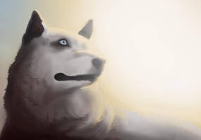 Wolf-light by anythingLDA