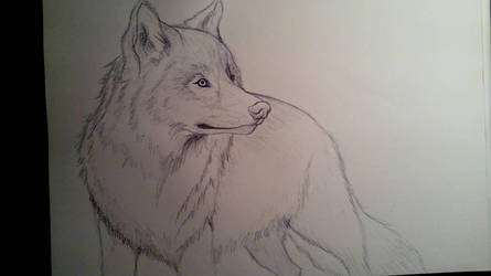 Wolf by anythingLDA