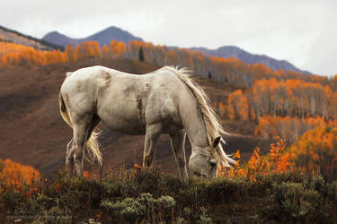 White Horse by RandomTechie27