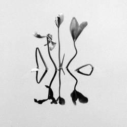 - Fragile ii - by TomFindahl