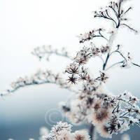 frozen 49849 by topinka