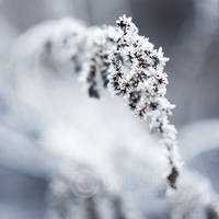 frozen 9898 by topinka