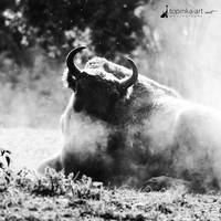 friend from zoo III by topinka