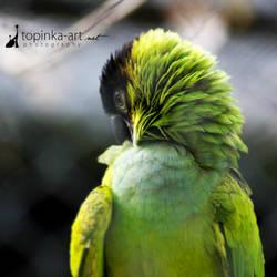 friend from zoo VIII by topinka