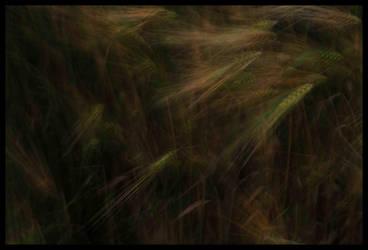 dancing in the wind by Olga-Zervou
