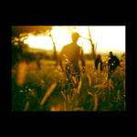 Golden Day by Olga-Zervou