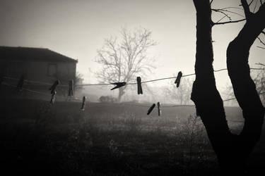 Morning Mist by Olga-Zervou