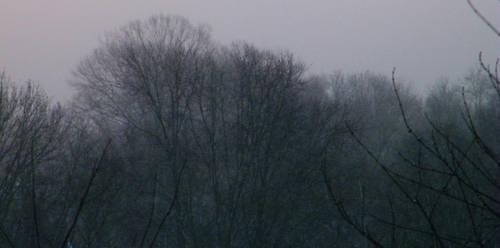 snowy trees by Xen423