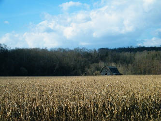 cornfield by Xen423