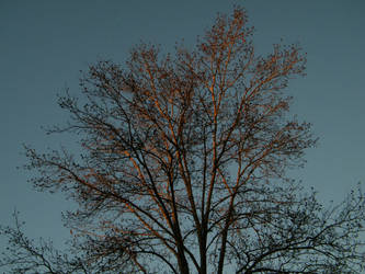 evening tree by Xen423