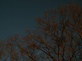 evening trees2 by Xen423