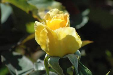 Flower - 1 by nebheadian