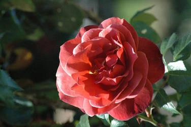 Flower - 2 by nebheadian