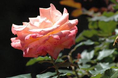 Flower - 3 by nebheadian