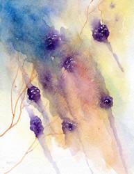 Blackberries by rev-Jesse-C