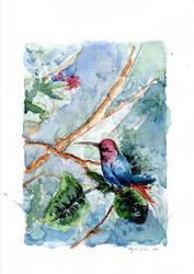 Kolibri 2 by NejibSila