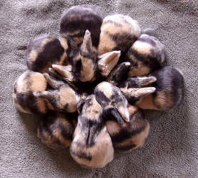 Ok, the actual bunnies by bunnehspammin