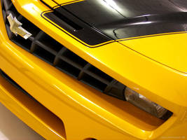 Bumblebee by wbmj-photo