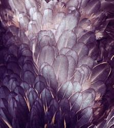 Texture 05 by tamaraR-stock